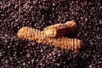 クロッカンシュー ザクザクの初夏限定シュークリーム「コーヒーザク」濃厚コーヒー×カスタードクリーム