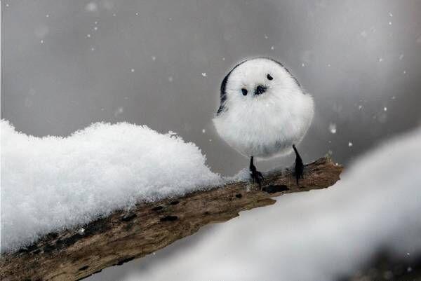 「嶋田 忠 野生の瞬間 華麗なる鳥の世界」東京都写真美術館で、野生の鳥の求愛ダンスを捉えた写真など
