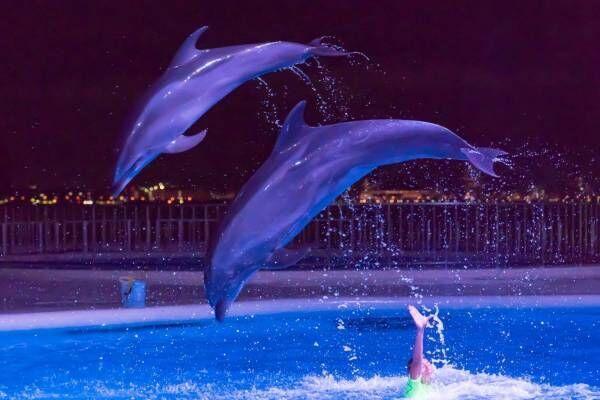 福岡マリンワールド海の中道「夜のすいぞくかん」夜景×イルカショーなど、九州の祭りを楽しむ夏イベントも