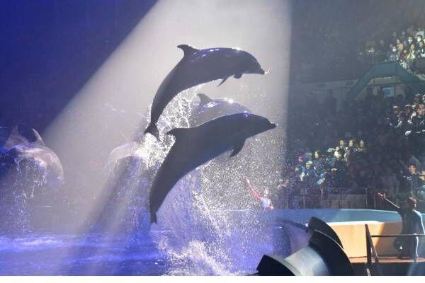 南紀白浜アドベンチャーワールドのナイトマリンライブ「LOVES」イルカ&クジラのダイナミックショー