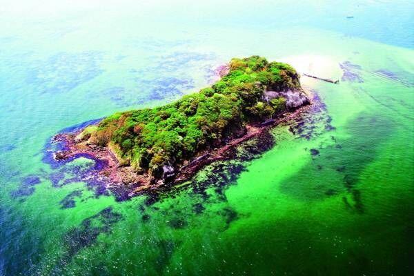 「Sense Island -感覚の島- 暗闇の美術島」横須賀・猿島で、夜の無人島でアート体験