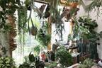 代官山T-SITEで様々な植物店が集結するマルシェイベント開催 - 生花や多肉植物、苔玉など
