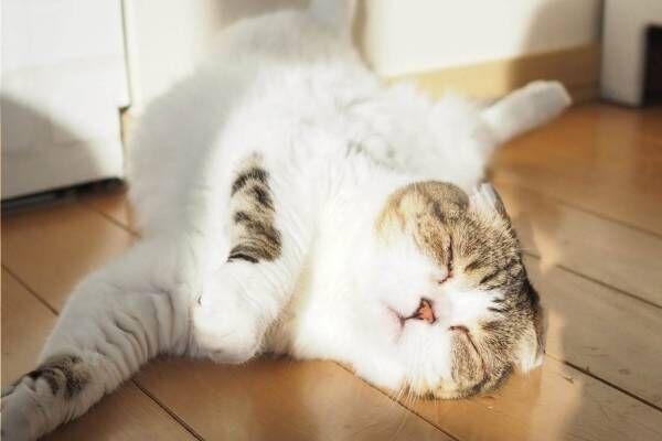 猫の合同写真&物販展「ねこ休み展」ルクア大阪で、阪神タイガースとのコラボ作品を初公開