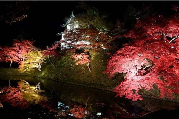 「弘前城 菊と紅葉まつり」青森・弘前公園で、1,000本の楓&2600本の桜のライトアップも