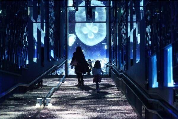 すみだ水族館「雪とクラゲ」美しい冬の都会にクラゲ浮かぶ幻想空間
