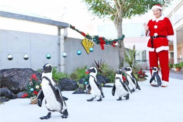 横浜・八景島シーパラダイスのクリスマス、サンタが水槽に現れるイワシショーやペンギンパレード