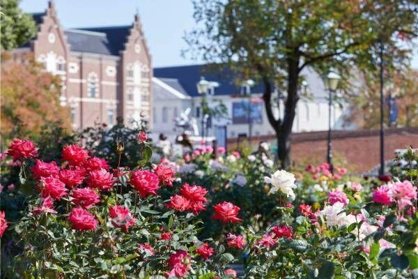 ハウステンボスの「秋バラ祭」約1,000品種のバラが咲き誇る - 夜は幻想的なライトアップも