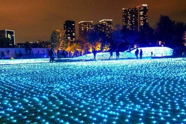 """品川シーズンテラスのイルミネーション、青色に輝く芝生広場や""""光の大階段"""""""