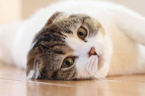 「ねこ休み展 in 船橋」猫の彫刻やぬいぐるみなど作品展示400点以上、物販2,000点以上が集結