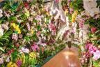 """国内最多200品種の蘭が集結「大胡蝶蘭展」長崎・ハウステンボスで、""""お花見""""スポット&蘭カフェ"""