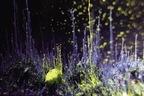 """現代アートの国際展「ヨコハマトリエンナーレ2020」横浜で開催、""""共存""""をめぐる対話の場"""
