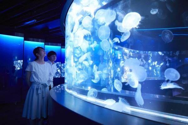 京都水族館初の大規模リニューアル、約20種5,000匹の新クラゲ展示エリア「クラゲワンダー」誕生