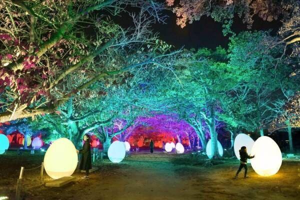 「チームラボ 福岡城跡 光の祭 2019-2020」夜の福岡城跡が光のアート空間に