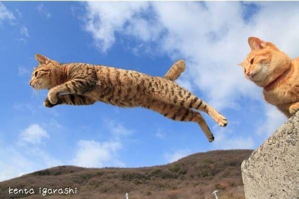 """「飛び猫写真展」広島・宮城・秋田で、ネコの""""ジャンプ姿""""を捉えた作品展示&グッズ販売も"""