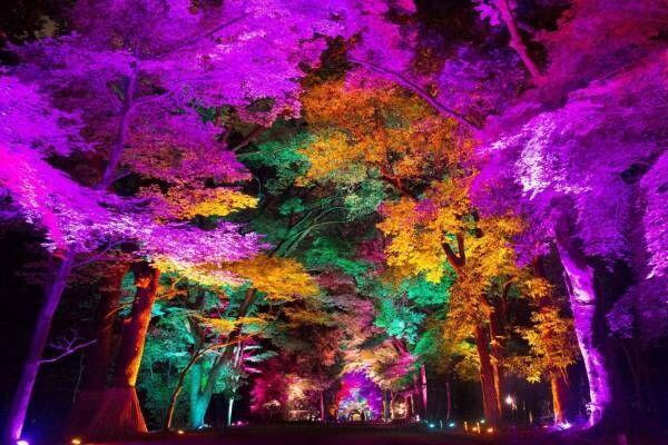 香川で「チームラボ 栗林公園 光の祭」自然の美しさを活かしたアート、呼応する光と音の空間