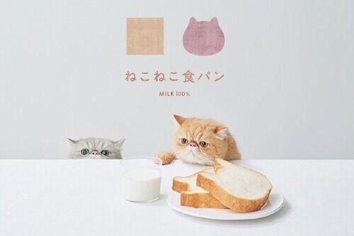 """""""猫型""""高級食パン専門店「ねこねこ食パン」名古屋に新店、しっとりもっちり牛乳100%のミルキーな味"""