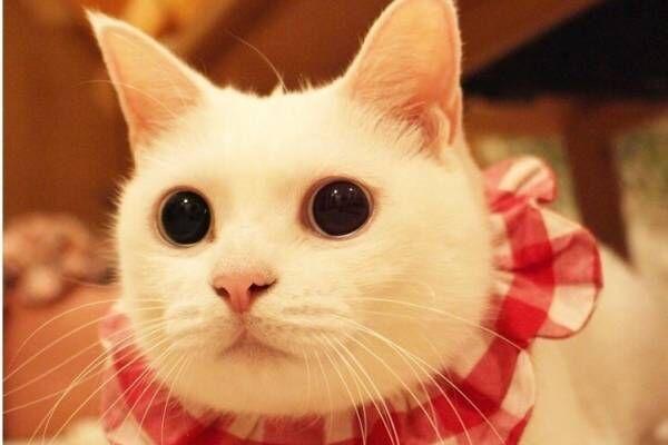 「ネコのいる暮らし展」猫60匹のライフスタイル写真展示、会場限定の猫グッズやアクセサリーも