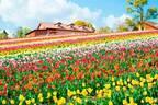 「さかいチューリップフェスタ」大阪・堺で、約10万本のチューリップが咲き誇る丘