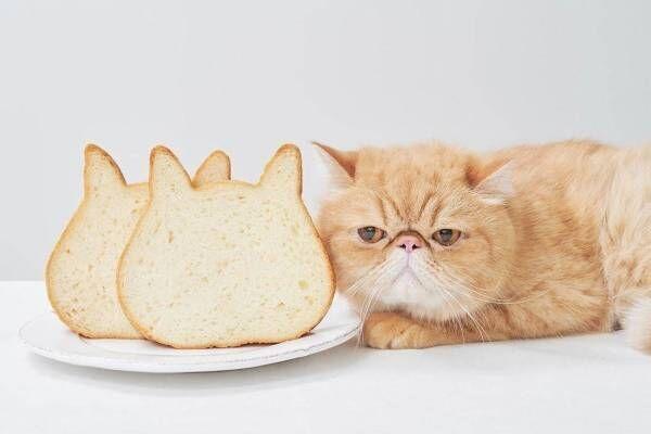"""""""猫型""""高級食パン専門店「ねこねこ食パン」福岡三越に限定出店、牛乳だけで仕込んだミルキーな味わい"""