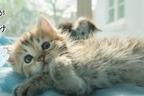 「ねこがかわいいだけ展」渋谷ヒカリエで、愛らしいネコ写真&動画2,000点が集結
