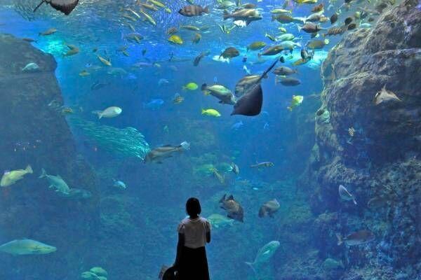 """「新江ノ島水族館」クラゲが主役の限定イベント、""""秋の海中散歩""""がテーマの展示も"""