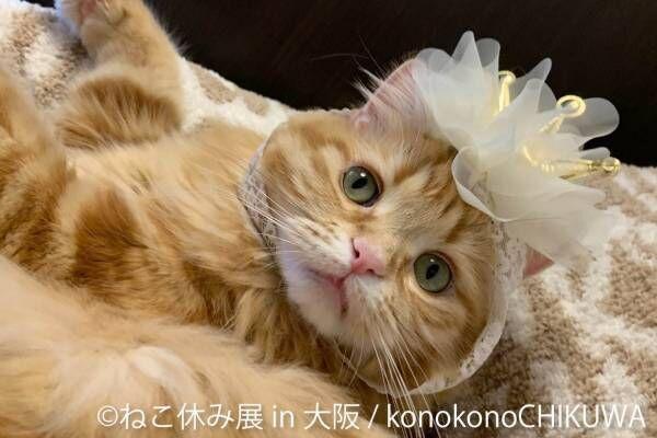 """猫の合同写真&物販展「ねこ休み展」がルクア大阪で、""""スター猫""""の作品300点以上&限定商品など"""