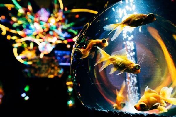 """「宇宙×アクアリウム」テーマの水族館が横浜ワールドポーターズで、""""宇宙を旅する""""エンターテイメント"""