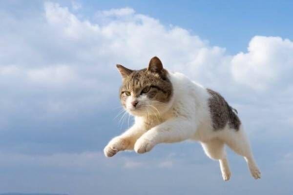 """""""もふもふの祭典""""「もふあつめ展」大阪・天王寺で、猫をはじめ動物の写真や雑貨など800点以上"""