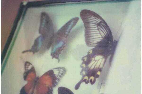 蜷川実花ポラロイド写真展「escape」新宿で、マーブルデニッシュ専門店グランマーブルとコラボも