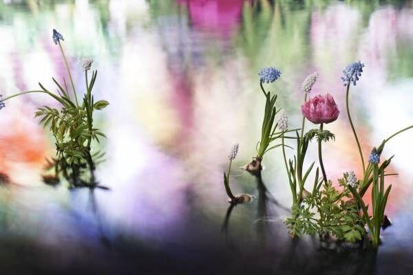 """ヴァン クリーフ&アーペルが代官山で展覧会、""""ハナの光""""メゾンのジュエリーを花と光で表現"""