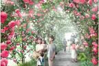 「いばらきフラワーパーク」国内屈指ローズガーデン&360度薔薇に囲まれるトンネル、アクティビティも