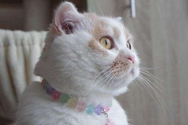 猫の合同写真展「ねこ休み展」千葉・柏タカシマヤで、ほっこり癒し系猫写真を展示&グッズ販売も