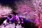 「夜桜ピンクのライトアップ」りんどう湖ファミリー牧場で、桜舞うプロジェクションマッピングも