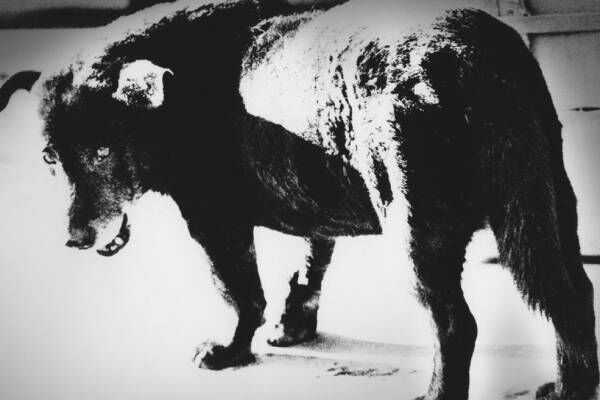 """展覧会「はじめての森山大道。」渋谷パルコで、《三沢の犬》など写真の魅力に迫る""""入門編""""展示"""