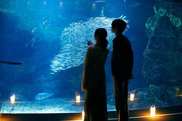 京都水族館「夜のすいぞくかん」幻想的な照明で空間演出、夜ならではのいきものたちの姿も