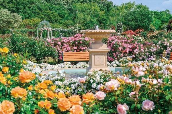 京成バラ園、1,600品種1万株の薔薇が咲き誇る「スプリングフェスティバル」薔薇を使った巨大アートも