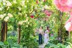 「熱海ローズフェスティバル」海を一望する丘陵地に咲き誇るバラ4千株、アカオハーブ&ローズガーデンで