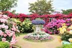 栃木・あしかがフラワーパーク「春のバラまつり」500種2500株のバラが見頃に、夜間ライトアップも