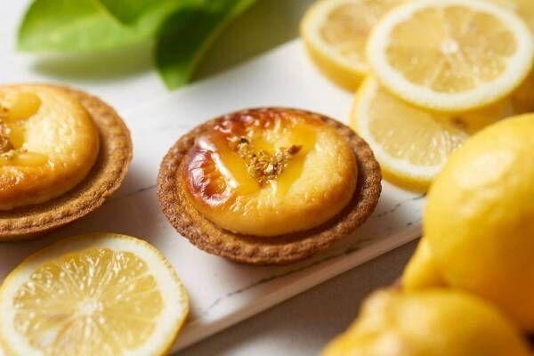 ベイク チーズタルト夏の新作「潮風レモンチーズタルト」ほんのり塩味を効かせた爽やかチーズムース