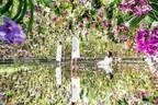 東京・豊洲「チームラボプラネッツ TOKYO DMM」13,000株のランの花に埋め尽くされる新作品