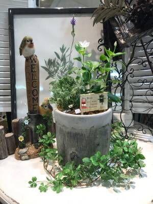 インテリアとして楽しむラベンダーの飾り方☆リース・ドライ・寄せ植えなどをご紹介