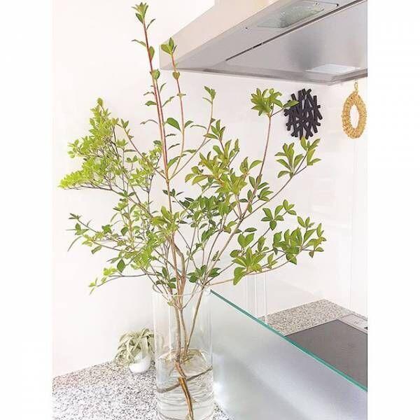 お部屋に森林の雰囲気を!インテリアとして飾る様々な【枝木】をご紹介