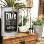 空き瓶を使って植物を飾るアイデア10選!アンティークもジャンクもお任せ♡