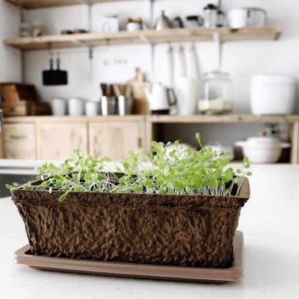 日差しも気温も気にしない!お家の中で野菜やハーブを育ててみよう♪