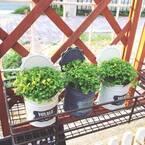 植物をおしゃれに育てよう!【キャンドゥ・ダイソー・セリア】のおすすめ園芸用品