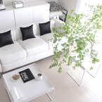 人気のドウダンツツジから紫陽花やひまわりまで♪グリーンやフラワーを飾って癒されるお部屋作りを♡