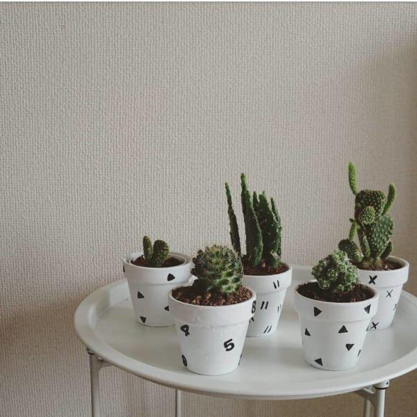 100均の観葉植物を育ててみよう!本物だから楽しめる観葉植物インテリア♪
