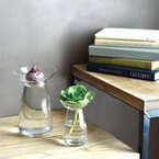 水耕栽培は「キュウコン」がおススメ♪お部屋がパッと華やぐ生花インテリア