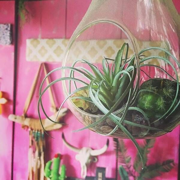 どこにでも飾れる!テラリウムで植物のあるインテリアを楽しもう♪