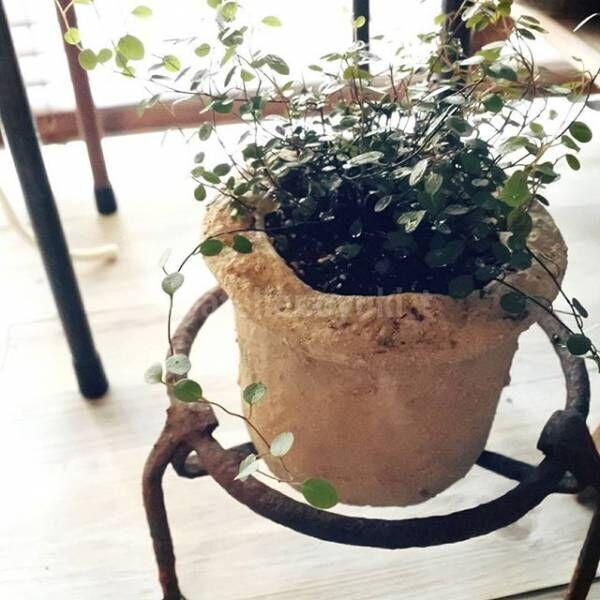 忙しくても大丈夫!初心者にもおすすめな観葉植物をインテリアに♡